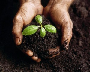 hands_in_compost (1)
