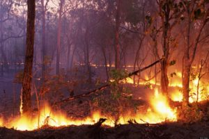 Youth Blog: Why Fire is a Threat to Water